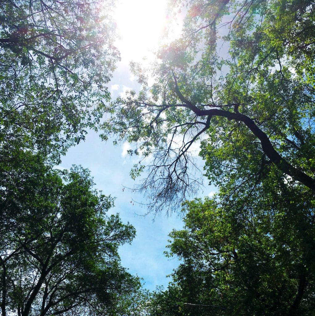 outside, nature, tree branches, sun, sun through branches, blue sky, see heather smile